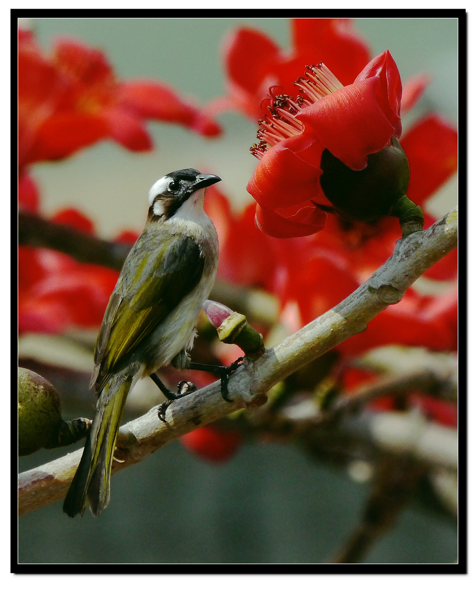 Photograph Flower Guard by Sherman C. on 500px