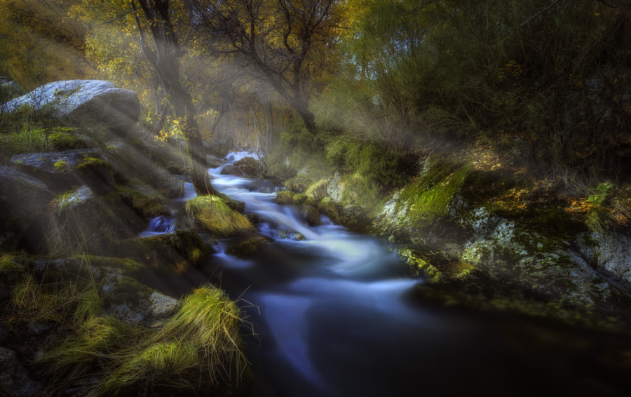 Photograph Vanish in a Heartbeat by Pedro Quintela on 500px