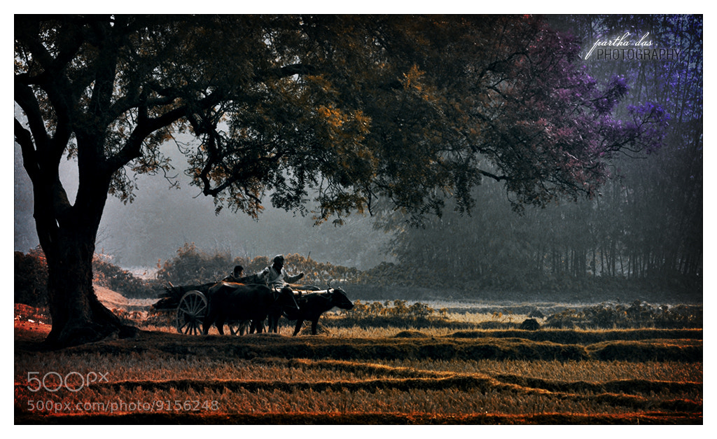 Photograph A Morning in The Village... by Partha Das on 500px