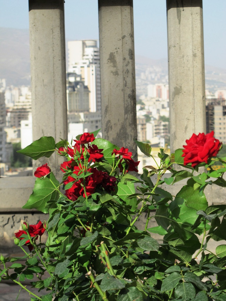Photograph Flower and the City by Masoud N on 500px