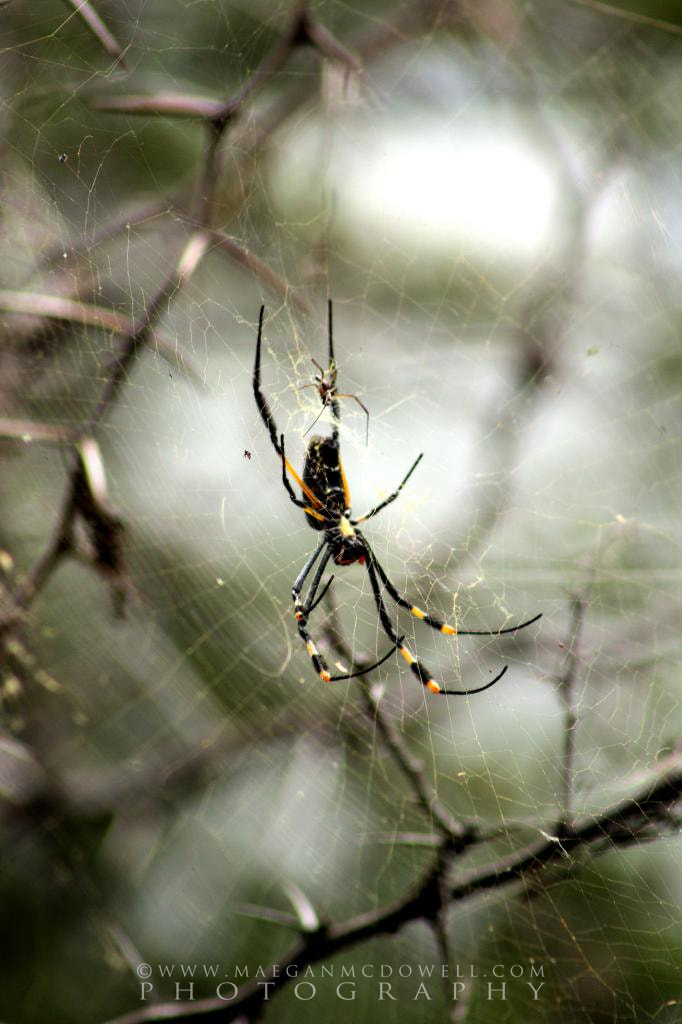 Photograph Golden Orb by Maegan Mcdowell on 500px