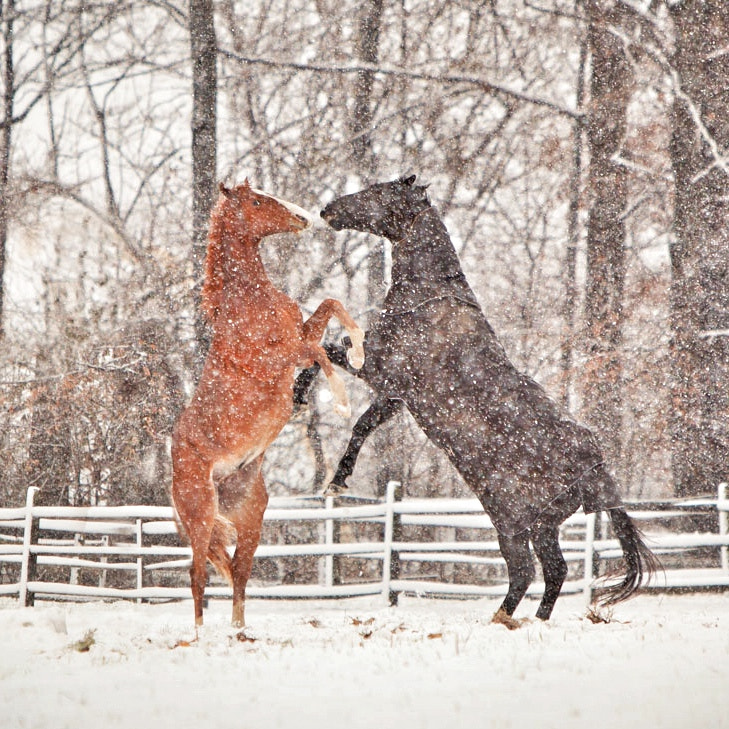 The first snow brought out the playfulness in these two.