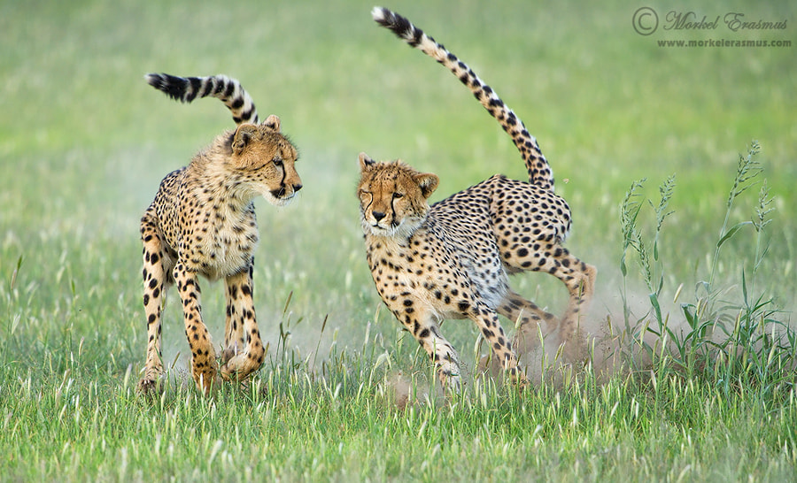 Photograph Playful Speedsters by Morkel Erasmus on 500px