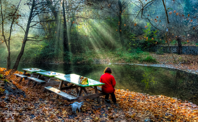 Photograph Autumn Dream by Nejdet Duzen on 500px