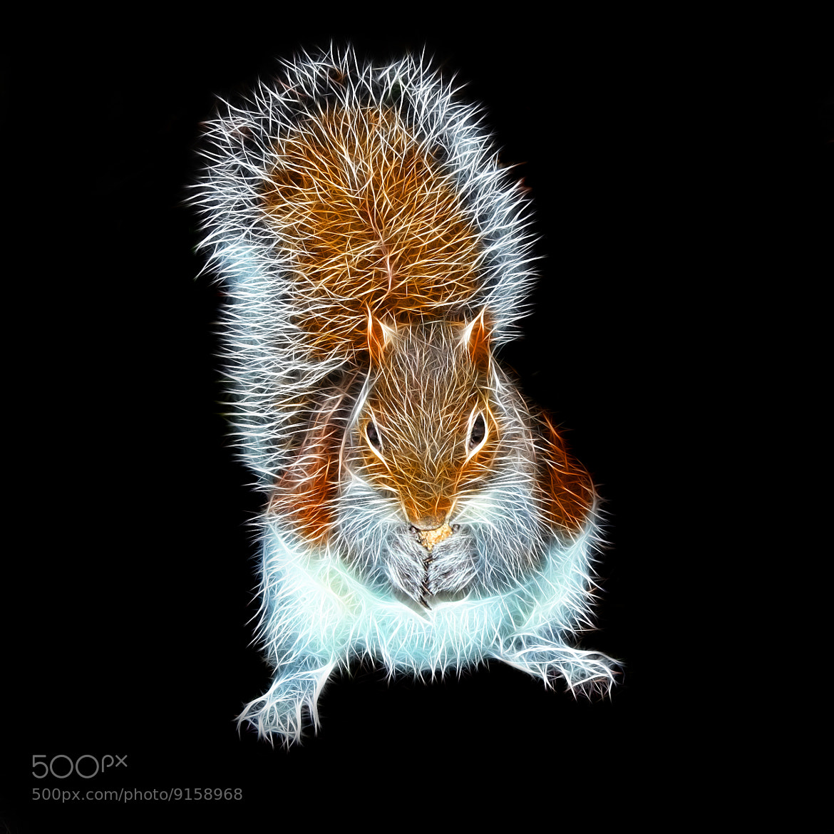 Photograph Squirrel by Vendenis   on 500px