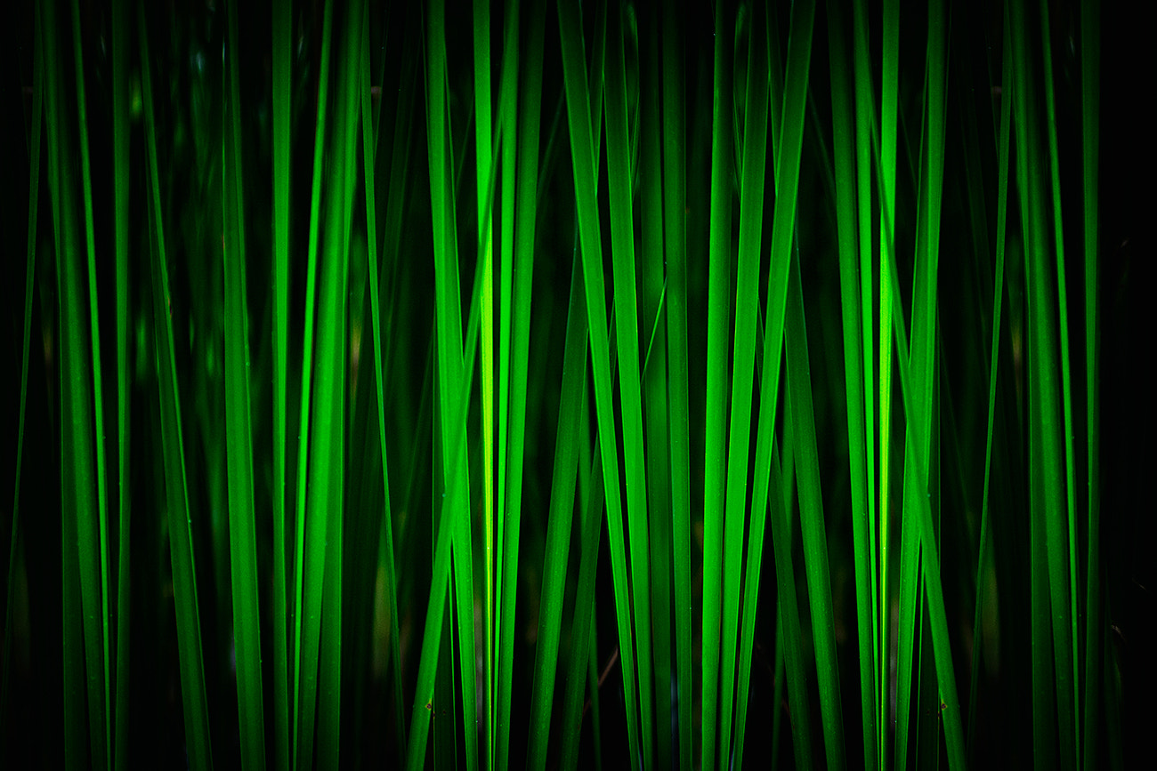Photograph Green by Alex Teuscher on 500px