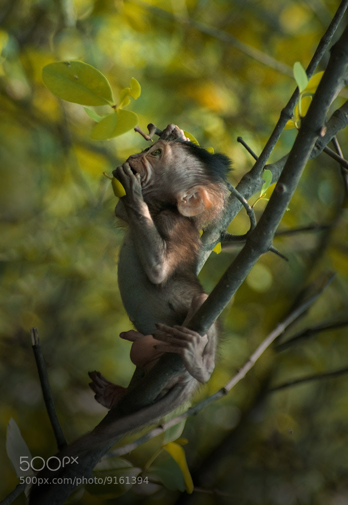 Photograph Monkey by Saelan Wangsa on 500px