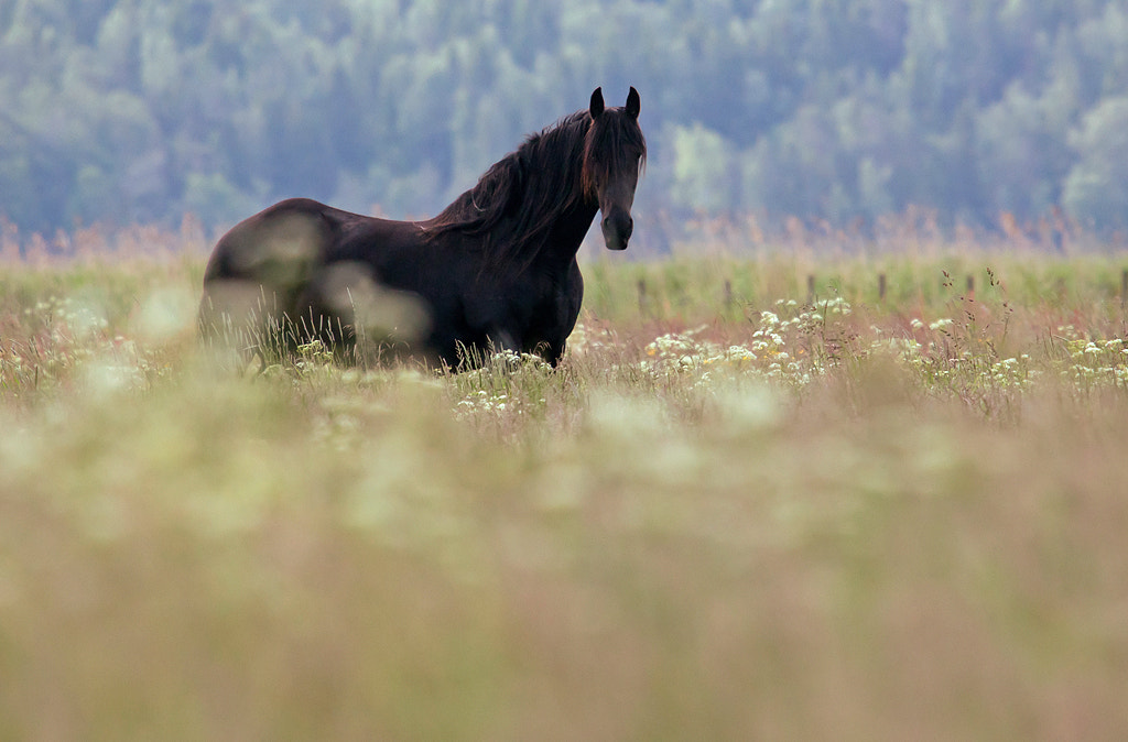 Photograph Horse by Allan Wallberg on 500px