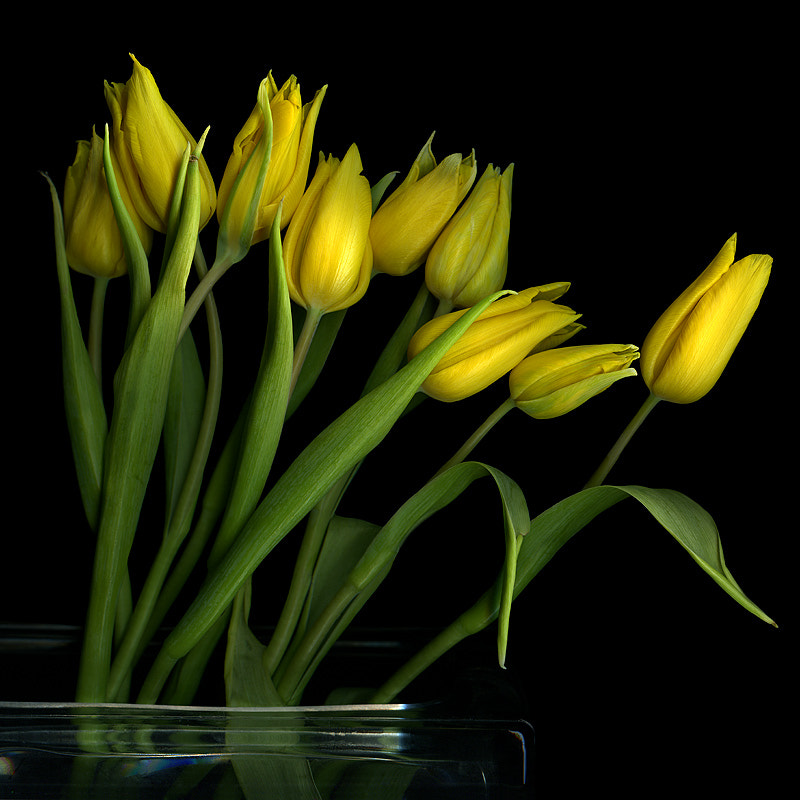 """Photograph Yeah, they were all """"YELLOW""""... by Magda Indigo on 500px"""