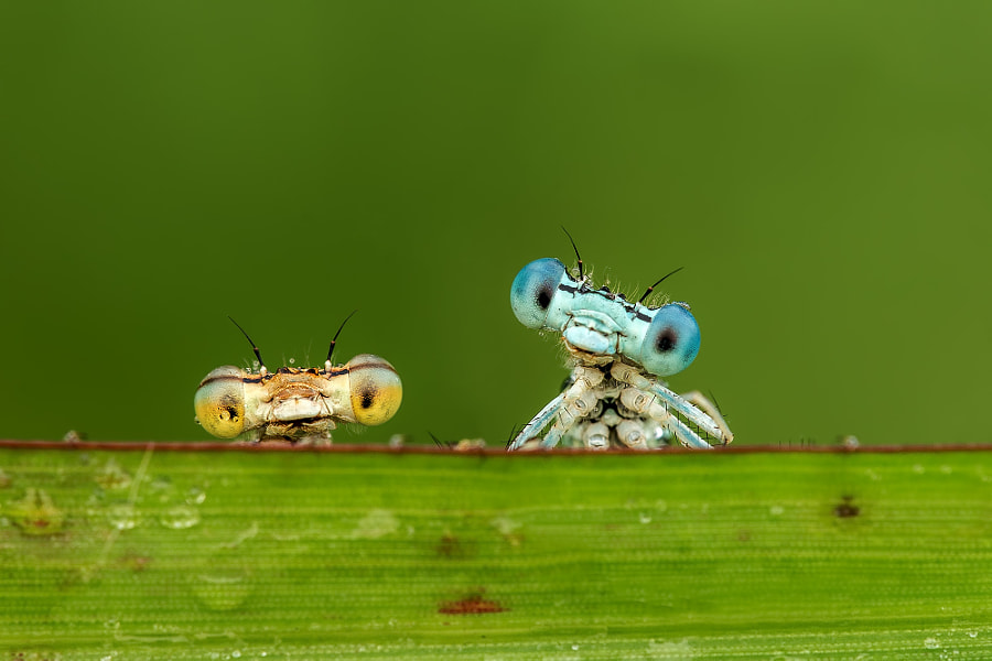 Everything You Need To Know About Macro Photography on Latest Write To Learn
