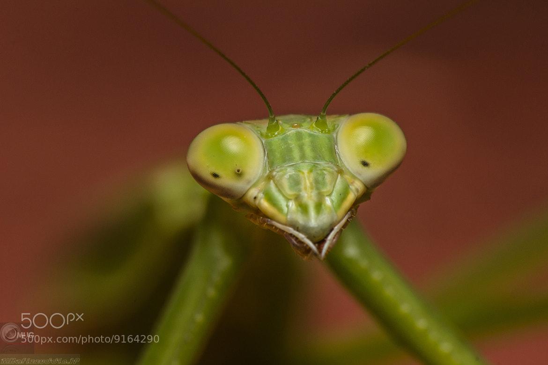 Photograph I'm watching you by Hafizzuddin Muhammad on 500px