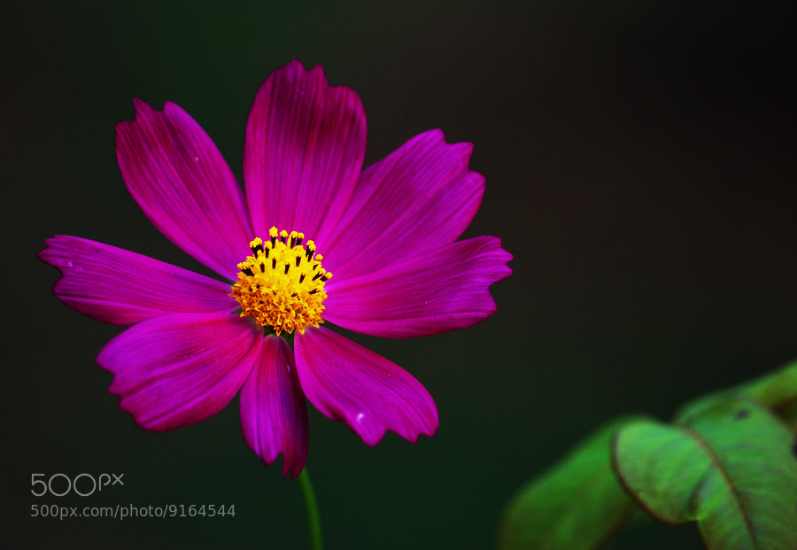 Photograph Flower by Onur Güner Güray on 500px