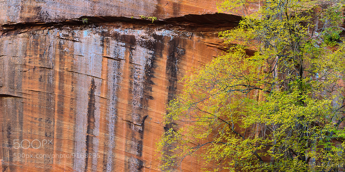 Photograph The West Fork Wall by Paul Dekort on 500px