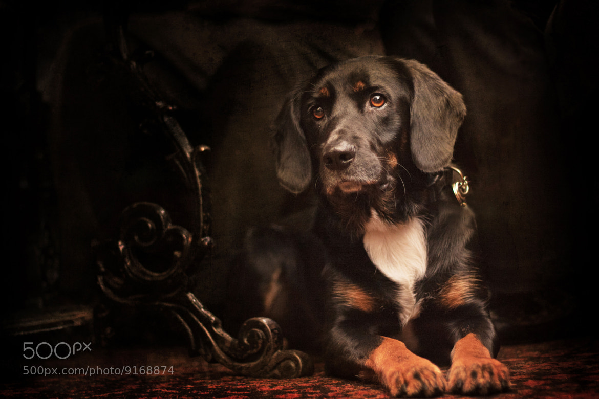 Photograph Bilko by DollyArt on 500px
