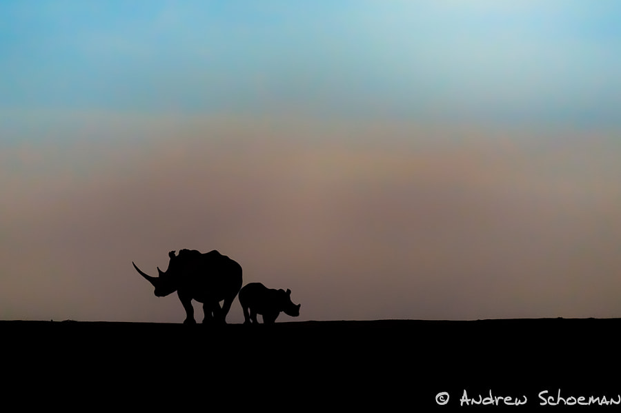 Rhino Dusk by Andrew Schoeman on 500px.com
