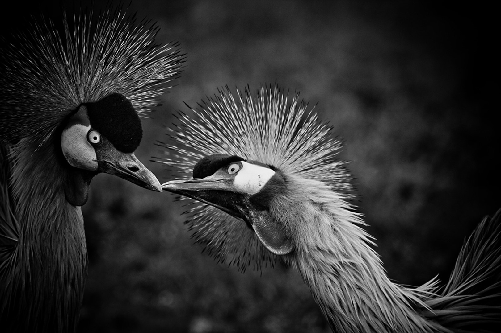 Photograph Kiss by Denis Van Linden on 500px