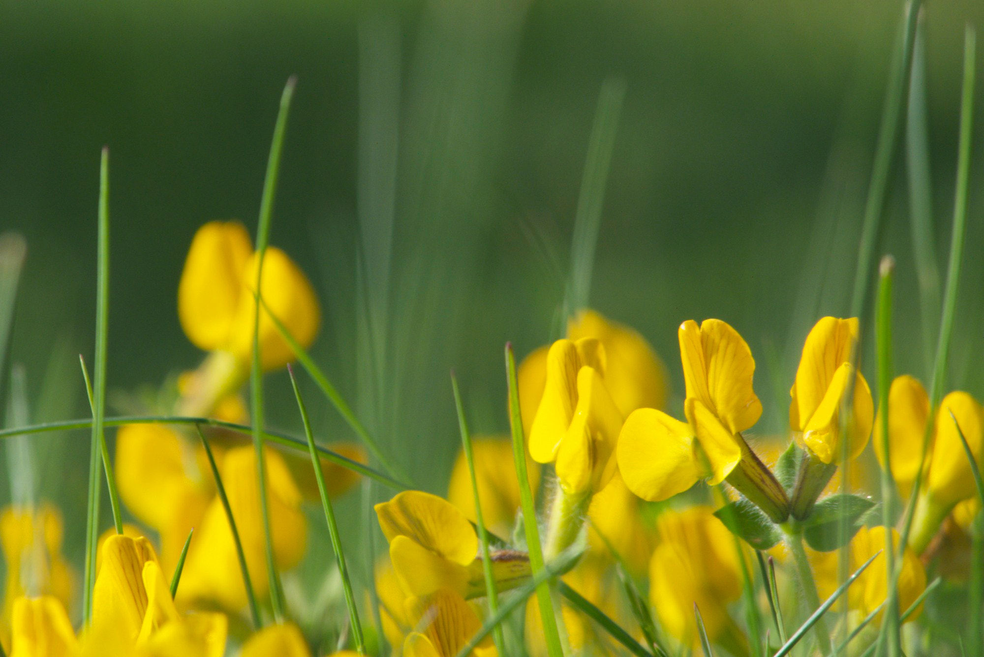 Photograph Yellow&Green by Maurizio Natali on 500px