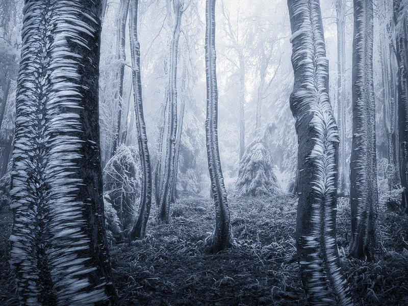 Photograph Frozen Forest by Jan Bainar on 500px