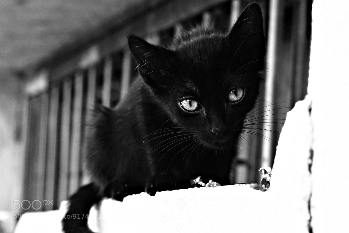 Photograph Kitten in the street. by Vanessa  Arellano on 500px