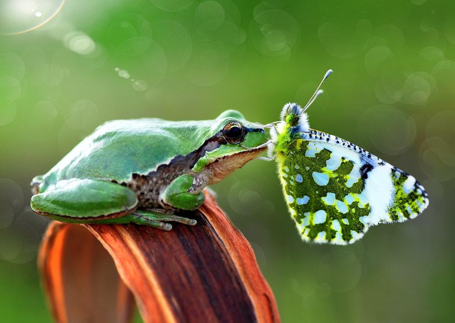 v2?webp=true&sig=7febdeaab66d883e157db0b08b300e0f2ace8fe4a8f76086beb40bf89daab8dd 20 animaux et des papillons... Walt Disney pour de vrai