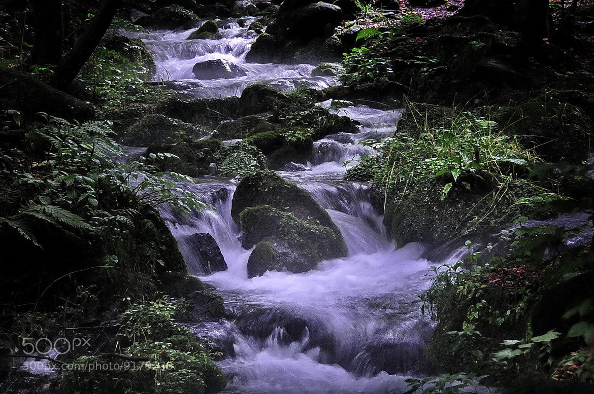 Photograph Clear stream in the forest -1 by Ken Ohsawa on 500px