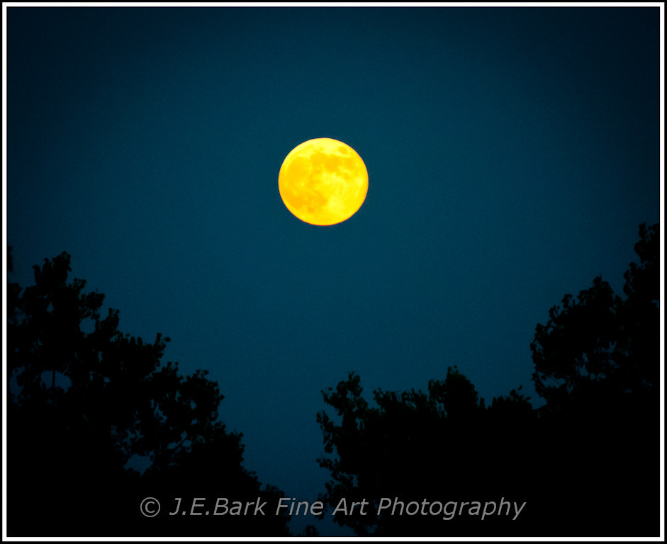 Photograph Full Moon Rising by J. E. Bark on 500px