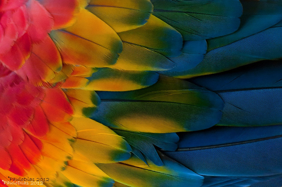 Photograph feathers by Paulo Dias on 500px
