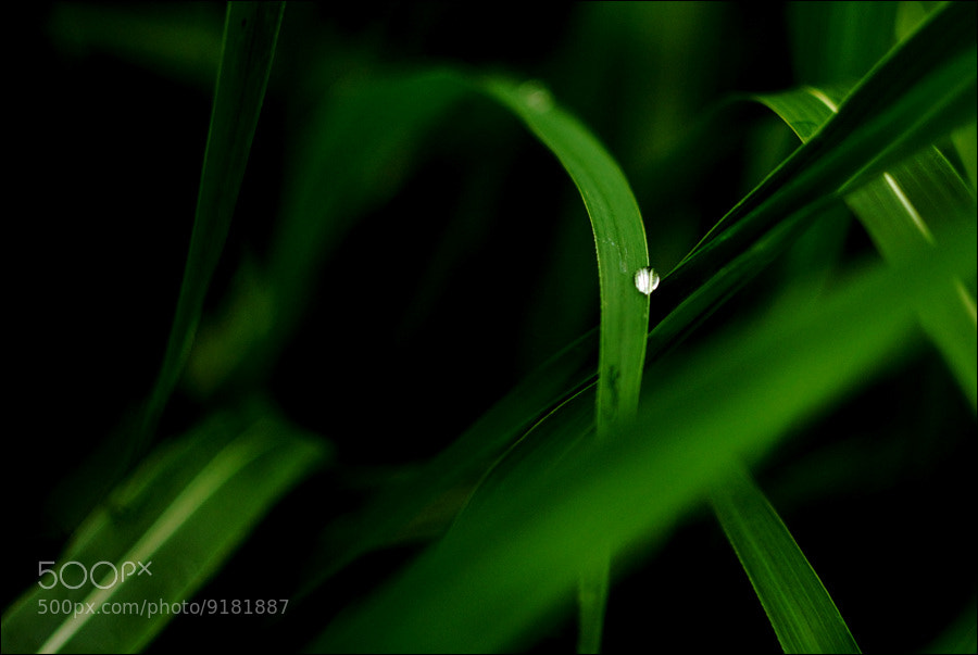 Photograph Natural Diamond  by D W Kim on 500px