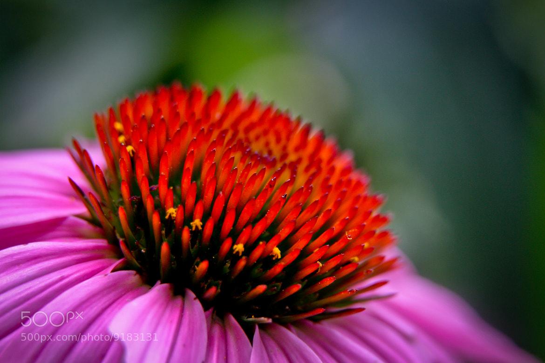 Photograph Suburban Garden by Kush Patel on 500px