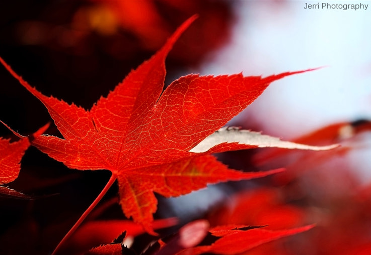 Photograph Red by Jerrica Raglin on 500px
