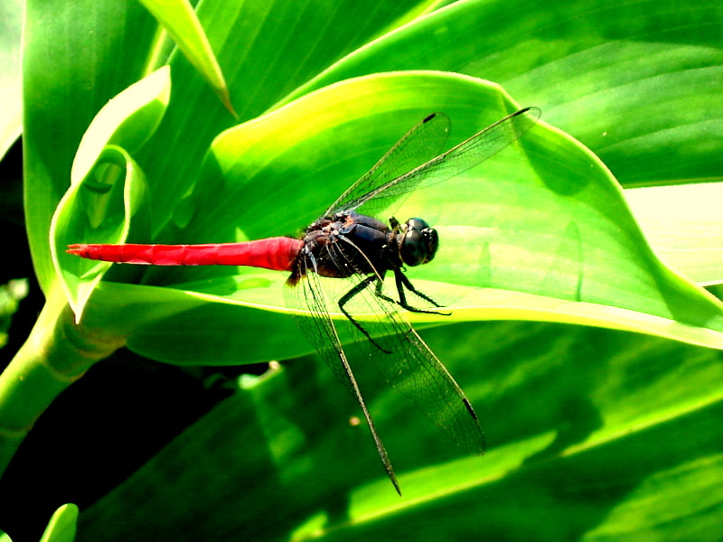Photograph DRAGON FLY LANDING POSTURE by naveen sharma on 500px