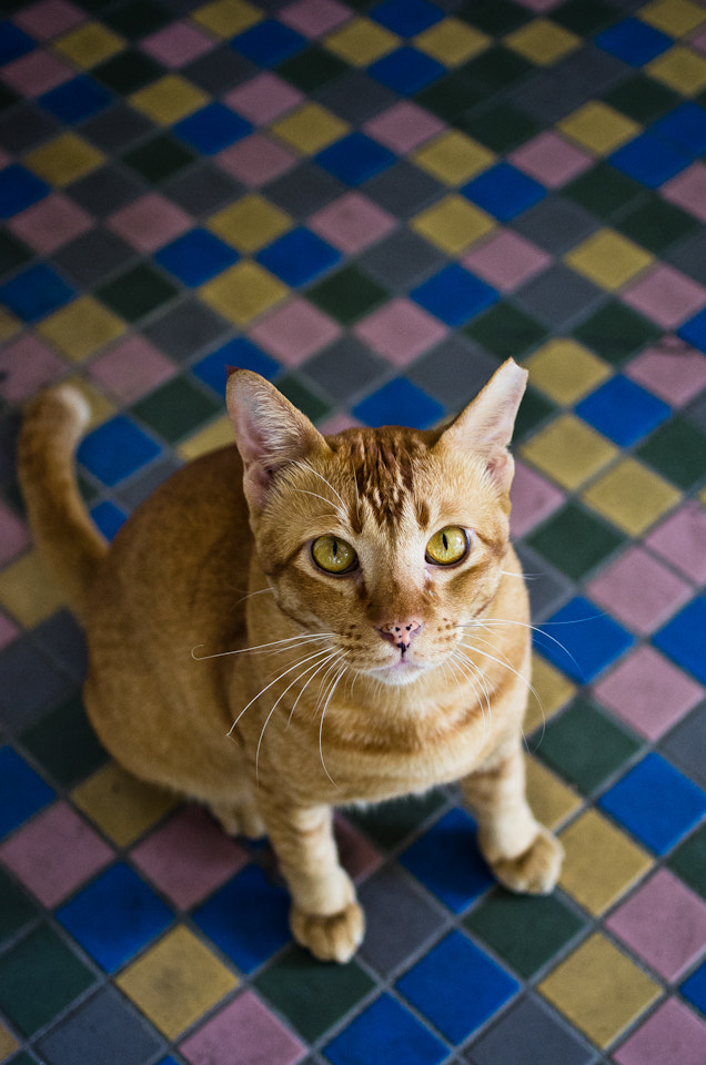 Photograph Cat #8 by Gabriel Choo on 500px