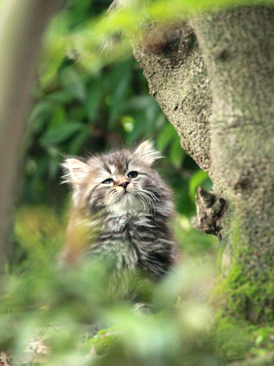 Photograph Kitten by Kaz Watanabe on 500px