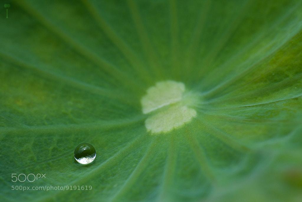 Photograph Pure Zen by Romain Matteï on 500px