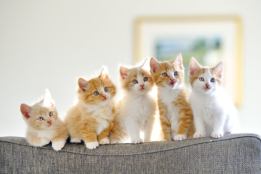 Photograph Kittens by Olav  Thokle on 500px