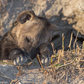 Nap Time by Andrew Schoeman (andrewschoeman)) on 500px.com