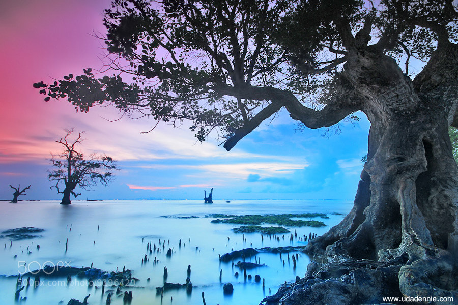 Photograph TREE by Uda Dennie on 500px
