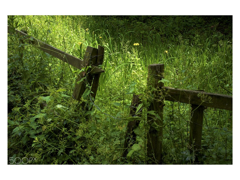 Photograph Overgrown garden by Paul Treacy on 500px