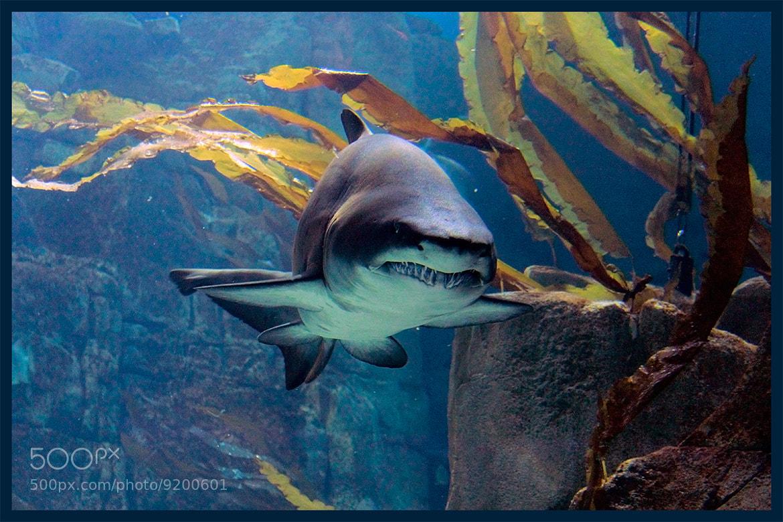 Photograph Fear of the Shark  by KEREM ŞENSÖZ on 500px