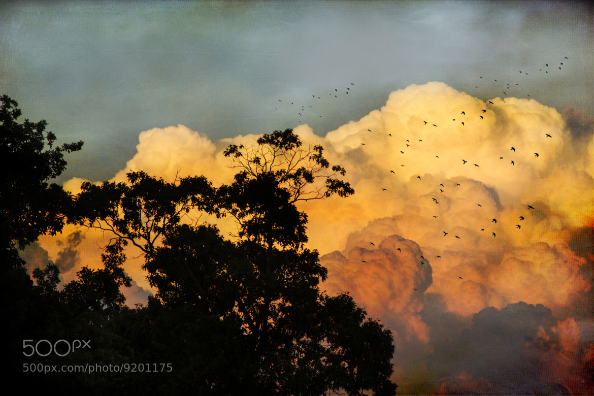 Photograph Fly Away Free by John Rivera on 500px