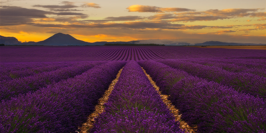 Lavender - Provence, France by Andre Distel on 500px.com