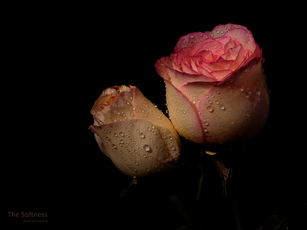 Photograph The Softness by Iman GM on 500px