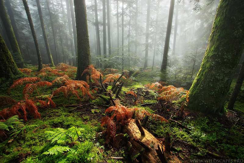 Photograph Feeling Forest's Soul by Maxime Courty on 500px
