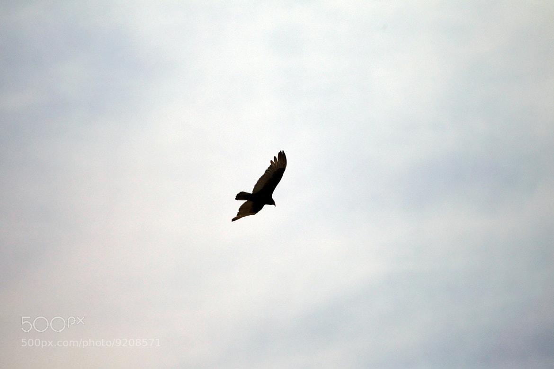 Photograph Flying by Victorya Smirnova on 500px