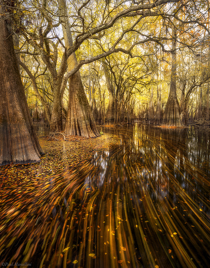 Photograph Suwannee Valley Streaks by Paul Marcellini on 500px
