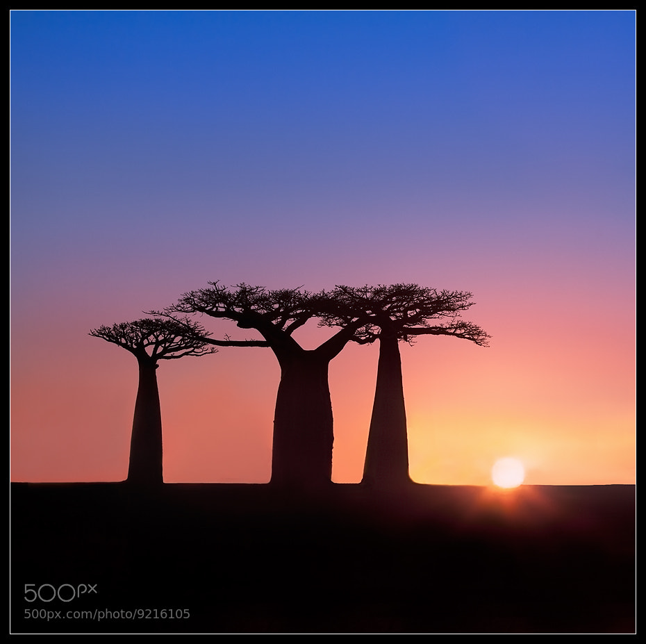 Photograph Madagaskar by Victoria Rogotneva on 500px