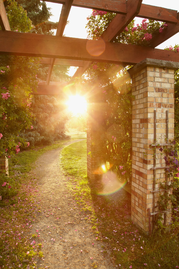 Photograph Pergola by Jennifer Squires Ross on 500px