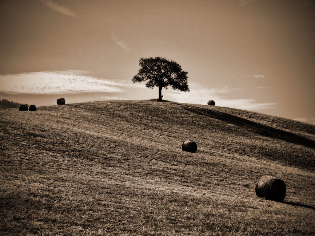 Photograph I'm the tree by mario de marzi on 500px