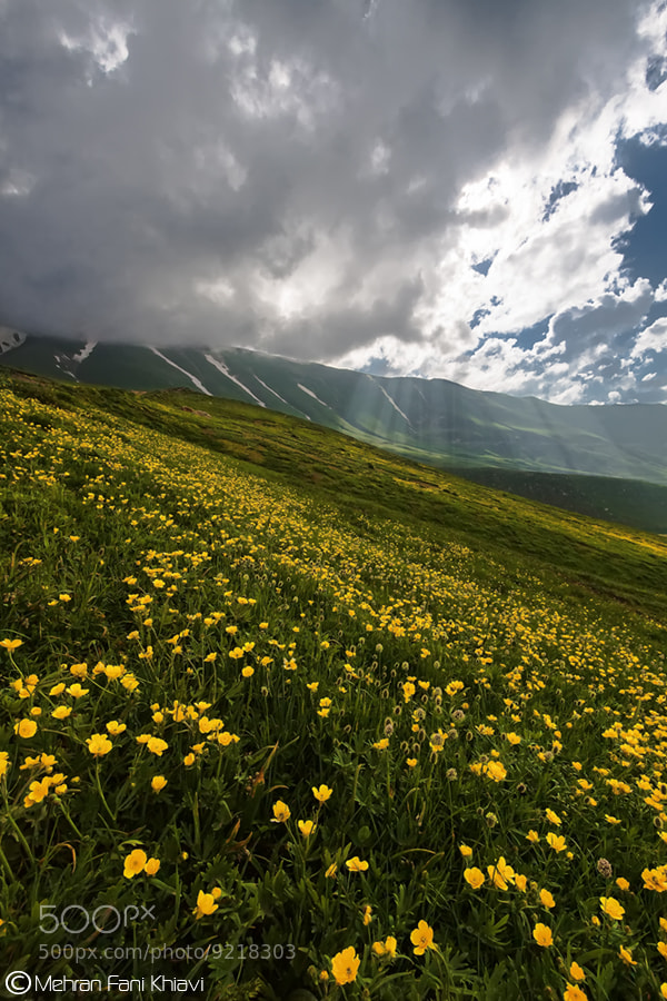 Photograph Spring and her beauty! by Mehran Fani Khiavi on 500px