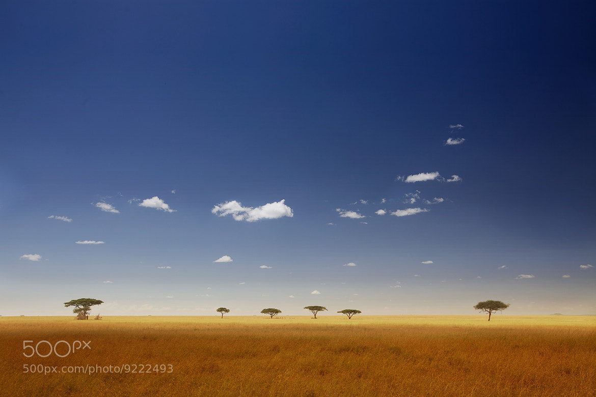 Photograph Serengeti Plains by Jus Medic on 500px